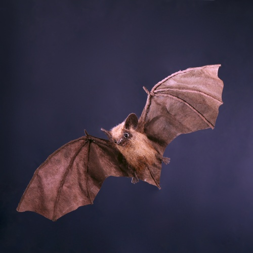 Final Bat Image.jpg